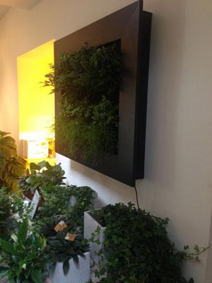 Damme kunststoffen kunststof bloembakken - Muur van de ingang ...
